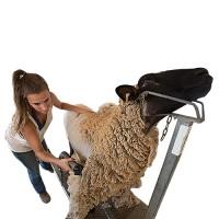 Agrozon Koyun Kırkım Sabitleme Aparatı